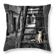Here Kitty Kitty Kitty... Throw Pillow