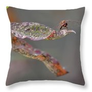 Here's Lookin' At You- Dragonfly Throw Pillow