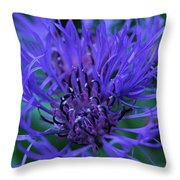 Here's Looking At Bluet Throw Pillow