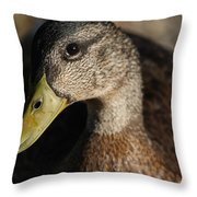 Heres Looking At You Throw Pillow