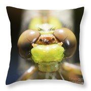 Here's Looking At You Kid Throw Pillow