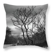 Hermit Island Tree 0192 Throw Pillow