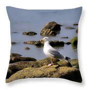 Herring Gull At Charmouth Throw Pillow