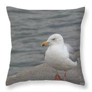 Herring Gull In Copenhagen Throw Pillow
