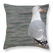 Herring Gull Observing Throw Pillow