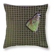 Hessel's Hairstreak Butterfly Throw Pillow