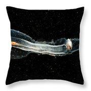 Heteropod Mollusk Throw Pillow