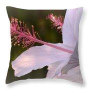 Hibiscus Bloom Pastel Throw Pillow
