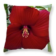 Hibiscus By Picket Fence Throw Pillow