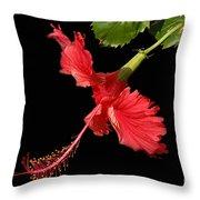 Hibiscus On Black Background Throw Pillow