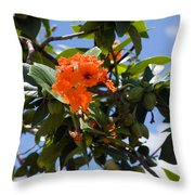 Hibiscus Rosasinensis With Fruit On The Indian River Throw Pillow