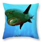 Hickey Throw Pillow