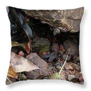 Hidden Sealife Throw Pillow