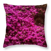 Hidden Window Throw Pillow