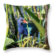 Hiding In The Wetlands Throw Pillow