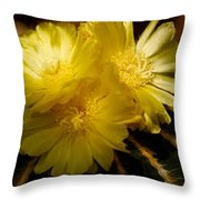 High Angle View Of Cactus Flowers Throw Pillow