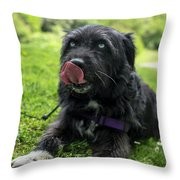Highland Park Blue Eyes Dog Rochester Ny Throw Pillow