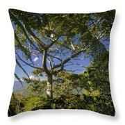 highlands in Costa Rica 2 Throw Pillow