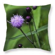 Hill's Thistle Flower And Buds Throw Pillow