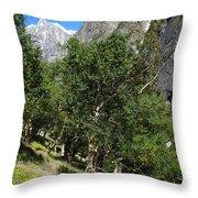 Himalayan Bhojpatra Trees 4 Throw Pillow