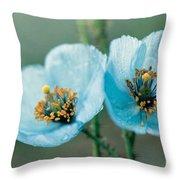 Himalayan Blue Poppy Throw Pillow