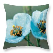 Himalayan Blue Poppy Throw Pillow