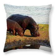 Hippo Mother And Child - Botswana Africa Throw Pillow