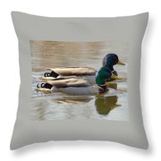 Two Mallards Swimming Quietly Throw Pillow