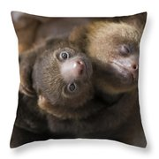 Hoffmanns Two-toed Sloth Orphans Hugging Throw Pillow by Suzi Eszterhas