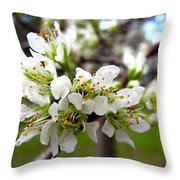 Hog Plum Blossoms Throw Pillow