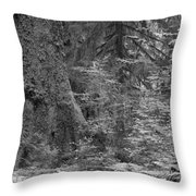 Hoh Rain Forest 3369 Throw Pillow
