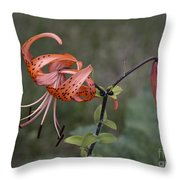 Homestead Tiger Lilly Throw Pillow