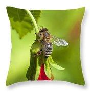 Honey Bee 11 Throw Pillow