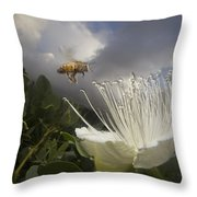 Honey Bee Apis Mellifera Approaching Throw Pillow by Mark Moffett