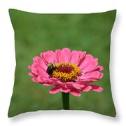 Honey Bee At Work Throw Pillow
