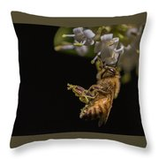 Honey Bee Kick, Apis Mellifera Throw Pillow