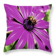 Honey Bee On A Spring Flower Throw Pillow