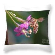 Honey Bee On Goji Berry Flower Throw Pillow