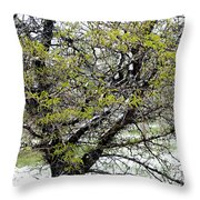 Honey Locust Tree On A Spring Snow Day Throw Pillow