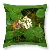 Honeybee On Clover Looking At Camera Throw Pillow