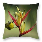 Honeyeater On Bird Of Paradise Throw Pillow