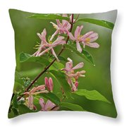 Honeysuckle 1979 Throw Pillow