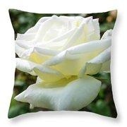 Honor Hybrid Tea Throw Pillow