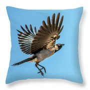 Hooded Crow In Flight Throw Pillow