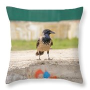 Hooded Crow On A Wall Throw Pillow