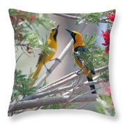 Hooded Oriole Duo Throw Pillow