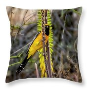 Hooded Oriole V1834 Throw Pillow