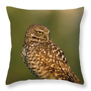 Hoot A Burrowing Owl Portrait Throw Pillow