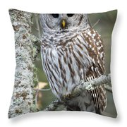 Hoot Hoot Hoot Are You Throw Pillow by Beve Brown-Clark Photography