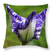 Horizontal Spring Flambe Throw Pillow
